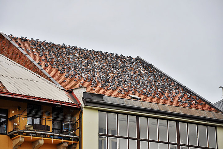 A2B Pest Control are able to install spikes to deter birds from roofs in Muswell Hill.