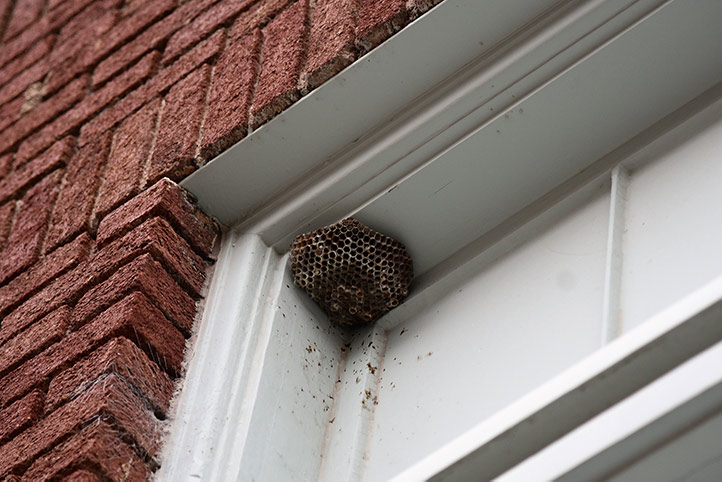 We provide a wasp nest removal service for domestic and commercial properties in Muswell Hill.